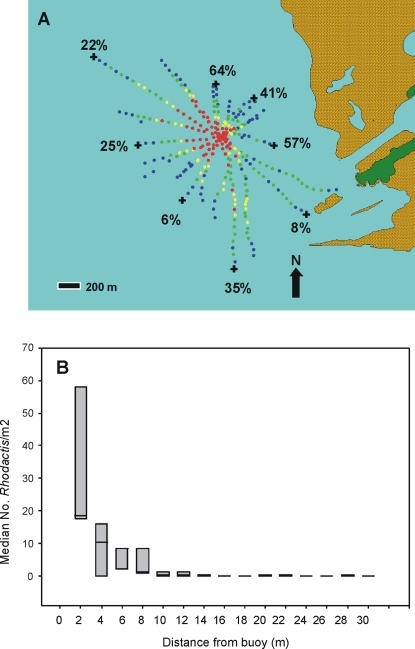 Details of corallimorph invasion near man-made objects.A) Extent of corallimorph infestation on western shelf of Palmyra Atoll NWR (close-up of Fig. 1C). Color codes correspond to estimated benthic cover of corallimorphs: red = high (>60%), yellow = medium (>30–60%), green = light (1–30%), blue = no visible corallimorphs. The ship is at the center of the red zone. Estimated percentage of coral cover at limits of corallimorph infestation. B) Box plot (5 and 95 percentile, median) of numbers of Rhodactis/m2 at 2 m intervals from 3 mooring buoys.