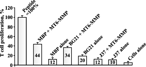 MT6-MMP proteolysis of MBP generates highly specific immunogenic peptides which efficiently stimulate the proliferation of the specific T cell clone.MBP, BG21 and J37 (5 µM each) were cleaved by MT6-MMP (an enzyme-substrate ratio of 1∶100). The irradiated splenocytes from B10.PL mice were co-incubated with the digest reactions. The CD4+ T cells (clone PGPR7.5) specific for the murine 1–15 MBP peptide presented in the MHC H-2U context were then added to the reactions. H3-thymidine was then added to the cells. The incorporation of the label into the T cells was measured by liquid scintillation counting. MBP alone, BG21 alone and J37 alone - intact MBP, BG21 and J37 (5 µM each) were added to the cells. Cells alone, no peptide. The 1–15 ASQKRPSQRSKYLATAS MBP peptide (5 µM) was used as a control ( = 100%). The numbers show the percentage relative to the peptide control.