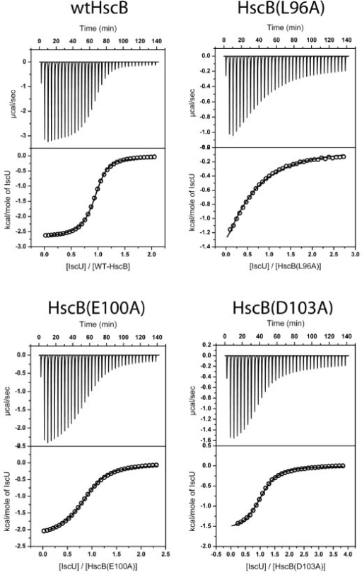 ITC data for titration of wild-type or selected alanine-substituted forms of HscB with apo-IscU. Titrations were performed in 50 mM HEPES pH 7.5, 150 mM NaCl, 4 mM TCEP at 25 °C. The concentrations of reactants were 0.25-0.4 mM HscB and 2.5-4 mM apo-IscU. Additional File 4 contains similar data for the remaining alanine-substituted forms of HscB.