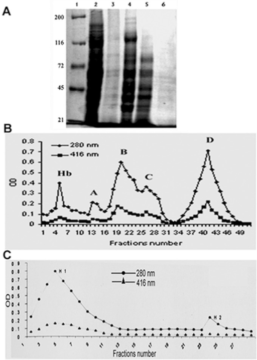 SDS-PAGE electrophoresis and chromatogram of eluted protein. A.SDS-PAGE (8%) was performed of polyethylene glycol (PEG) fractionated protein from solubilized microsome. Lane1, marker; lane 2, microsome; lane 3, solubilized microsome with CHAPS and sodium-cholate; lanes 4–6; solubilized microsomal protein with 10, 20, and 30% PEG, respectively. B. Chromatogram of eluted protein from DE-52 column. Protein was eluted from the column by linear gradient of KCl, and 10-ml fractions were collected. Four conspicuous peaks in terms of protein content measured at 280 nm were observed in the eluate as; Hb, A, B, C, and D (upper graph). Fractions were pooled, and heme content was tested at 416 nm (lower graph). C. The pooled fractions of D peak were added to the equilibrated hydroxyapatite column. The protein was eluted from the column by step gradient of phosphate buffer, and 5-ml fractions were collected. Fractions were pooled. There were two peaks, H1 and H2, in terms of protein content (upper graph). The lower graph represents the heme content of the pooled fractions.