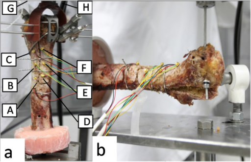 In the vertical tension test (a), eight markers were used: the femoral bed (A, B, C), the extended greater trochanter (D, E, F), the actuator (G, H). In the lateral tension test (b), the specimen was placed horizontal.