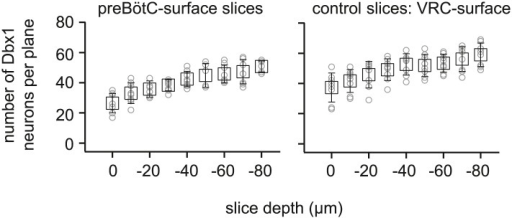 Average number of Dbx1 neurons detected at each acquisition depth from z = 0 (surface) to z = −80 µm in preBötC-surface slices and control slices with the ventral respiratory column (VRC) exposed at the slice surface.The number of Dbx1 neurons detected per focal plane per side (in 10-µm increments of the focal plane) is shown individually for each individual experiment (graygray unfilled circles) along with the mean ±SD for all experiments (black unfilled squares with black lines showing SD).DOI:http://dx.doi.org/10.7554/eLife.03427.006