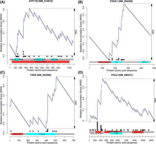 Example MSEA-clust output for four candidate genes. In each panel, the top portion shows the MAS score (y-axis) by the MSEA-clust method (see Materials and methods); the bottom part shows the mutation distribution (black triangles) across domains (red/cyan boxes) in the transcript (x-axis). (A)ATP11B in UCEC. (B)FOXA1 in BRCA. (C)FZD6 in UCEC. (D)POLE in UCEC.