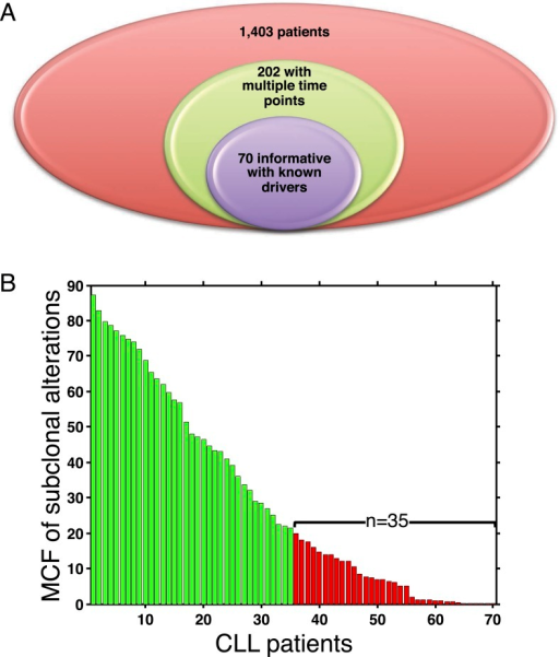 Summary of longitudinal data in 70 patients.(A) The 70 patients are selected from a large cohort of 1403 CLL patients with no-bias screening. (B) The 70 patients are ranked according to their minimal cell frequency of all available genetic lesions at diagnosis. Patients with minimal cell frequency less than 20 are in red, the others are in green.DOI:http://dx.doi.org/10.7554/eLife.02869.008