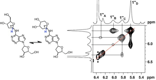 EXSY-2D-NMR of the H1″ spectral region for compound 6. Correlations between the isomers of 6 appear as contours at the intersecting lines between signals for the H1″ protons, indicating a dynamic equilibrium between the α-pyranose, β-pyranose, α-furanose and β-furanose isomers of the 2-deoxyribose adduct located at the exocyclic N6-amino group of the adenine residue.