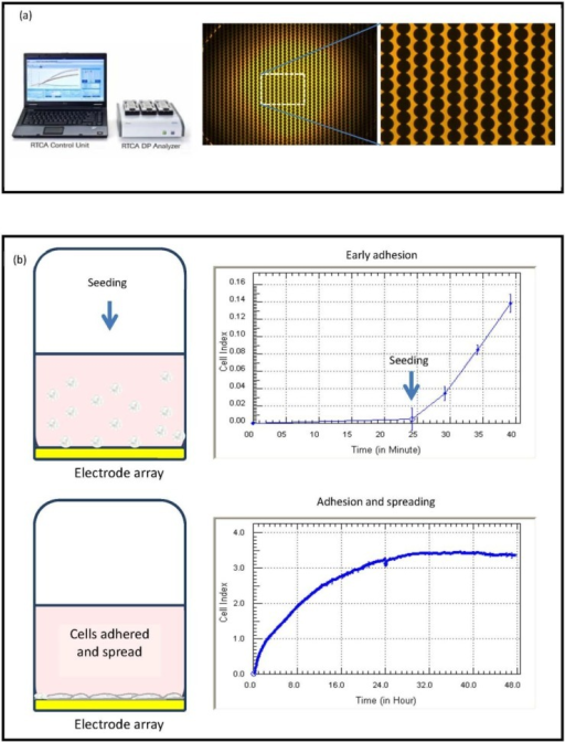 xCELLigence technology; impedance recording and cell adhesion. Summary of xCELLigence system technology and impedance, which shows: (a) the high density gold array on the E-plates; and (b) the initial phases of seeding and adhesion, which is recorded by the biosensor and represented as the Cell Index (adhesion).