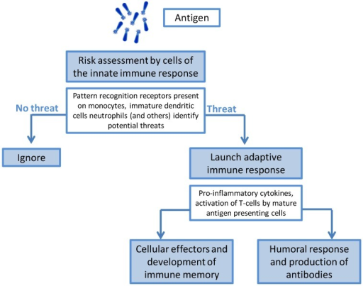 The role of the innate immune response.