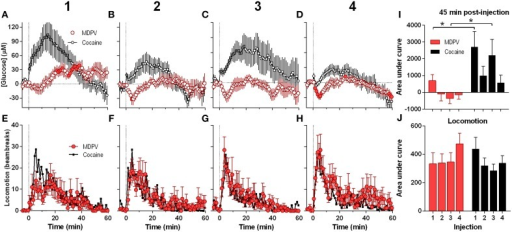 Relative changes in NAc [glucose] and locomotion induced by MDPV and cocaine injections (1–4) assessed at low temporal resolution (1-min bins). (A–D), The mean (±SEM) change in NAc [glucose] (μM) induced by MDPV (red circles) and cocaine (gray circles) for 60 min post-injection. (E–H), changes in locomotor activity (mean ± SEM; counts/min). Vertical hatched lines (at 0 min) marked the onset of 20-s injections of MDPV and cocaine. Horizontal dotted lines show basal levels (=0 μM). Concentration changes for the 60 min analysis window were significant for each MDPV [One-Way RM ANOVA, F(7, 420) = 2.63, 1.78, 1.48, and 3.54, all p < 0.05, respectively] and cocaine injection [F(6, 360) = 7.07, 3.63, 2.30, and 5.61]. Individual values significantly different from baseline (p < 0.05 Fisher test) are shown as filled symbols. MDPV induced significant locomotor activation after each injection [F(11, 671) = 2.06, 3.05, 3.80, 2.59 for injections 1–4, respectively; p < 0.05, for clarity post-hoc test results not shown]. Right panels (I,J) show mean ± SEM values of glucose and locomotor responses induced by MDPV and cocaine as assessed by the area under the curve for 45 min post-injection. Two-Way RM ANOVA analysis revealed a main effect of drug [F(1, 39) = 11.09, p < 0.05] and Injection [F(3, 39) = 3.28, p < 0.05] on NAc glucose. Interaction was not significant. Asterisks show significant between-drug differences. The effect of injection number on glucose response alone was not significant for both MDPV and cocaine (One-Way RM ANOVA). Overall locomotor responses during this time period showed no significant differences between drugs or injection numbers. Original cocaine data were previously reported in detail (Wakabayashi and Kiyatkin, 2015a) and shown here for comparison.