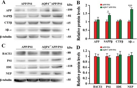 AQP4 deficiency did not alter expression of brain Aβ formation and degradation-related proteins in 12 month-old APP/PS1 mice. a Representative bands of Western bolt and b densitometry analysis of protein levels of APP and its proteolytic amyloidogenic fragments. c Representative bands of Western bolt and d densitometry analysis of protein levels of the biochemical components involved in the amyloid production (BACE1 and PS1) and degradation (IDE and NEP). Data represent mean ± SEM from 5 to 6 mice (3–4 female, and 1–2 male) per group. The statistical analysis was performed by Student's t-test