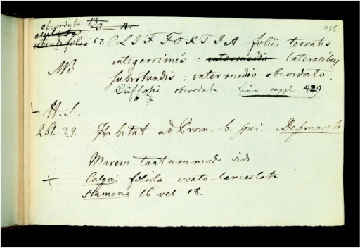 Daniel Solander's paper slip for the species Cliffortia obcordata, 1763. Manuscript descriptions of plants, Library & Archives, Natural History Museum, MSS BANKS COLL SOL. Reproduced by permission of the Trustees of the Natural History Museum (London).