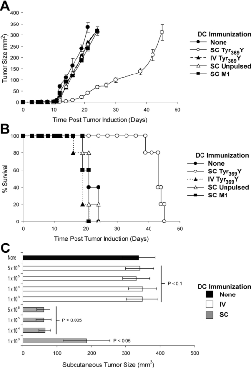 s.c., but not i.v., immunization with peptide-pulsed DCs controls s.c. melanoma outgrowth. Mice were immunized once with unpulsed or 1 μM peptide-pulsed DCs, and B16-AAD melanoma was injected s.c. 21 d later. (A) Kinetics of tumor outgrowth after i.v. or s.c. immunization with 105 DCs pulsed with either Tyr369Y or a peptide corresponding to residues 57–66 of the influenza A M1 protein. Data are the mean of five separate animals ± SD; representative data from one of six similar experiments are shown. Additional representative experiments are shown in Fig. S1. (B) Kaplan-Meier survival curves after B16-AAD challenge in mice immunized i.v. or s.c. with 105 DCs pulsed with Tyr369Y- or M1 flu peptide-pulsed DCs, scored as days from challenge until tumor diameter exceeds 300 mm2. Survival was significantly increased in s.c. immunized animals compared with untreated (P < 0.001). Data are for groups of five animals; representative data from one of six similar experiments are shown. (C) Day 21 s.c. tumor size in mice immunized i.v. or s.c. with 103 to 5 × 105 DCs pulsed with Tyr369Y (1 μM). P-values indicate statistical significance compared with unimmunized control (black bar) by two-sample Student's t test.