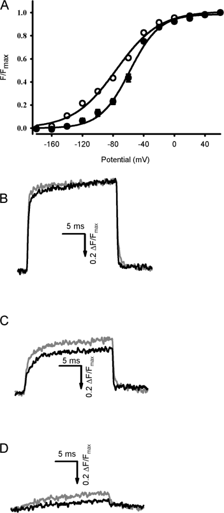 Effects of Ts3 in the fluorescence changes that track the movement of the S4 segment of domain I of mutant channel S216C stained with TMRM. Traces were recorded as described in Fig. 7. (A) F-V curves obtained before (white symbols) and after (black symbols) the treatment with 200 nM Ts3 (mean ± SEM, n = 3). The fluorescence recorded at each potential was normalized to the maximal fluorescence. Solid lines are the curves obtained by fitting the data with function 3. (B–D) Superimposed representative traces obtained at +60 (B), −60 (C), and −120 (D) before (gray traces) and after (black traces) the treatment with 200 nM of Ts3. The signals are shown as ΔF/F (%), where F is the fluorescence background. The arrow indicates the direction in which fluorescence increases. These experiments were performed at room temperature.