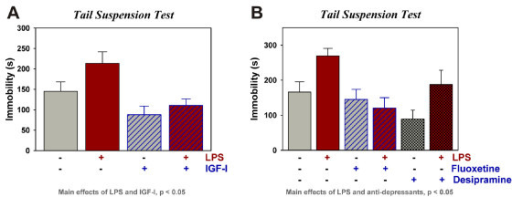 IGF-I displays anti-depressant activity in the presence or absence of LPS. IGF-I (1000 ng) or (PBS) was administered i.c.v. 30 min before i.c.v. PBS or LPS (10 ng). Depressive-like behavior was assessed as immobility in the TST to define the effect of IGF-I (A), fluoxetine and desipramine (B) on depressive-like behavior. n = 16 to 19 per treatment for data in (A) and n = 8 for 9 for the data in (B)