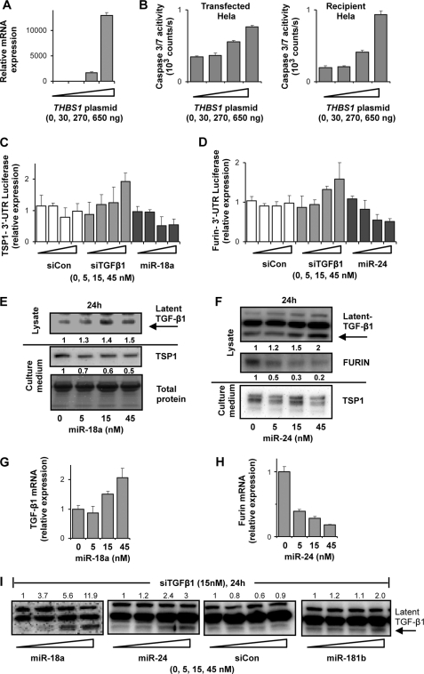 Increased maturation of TGF-β upon down-regulation                                        of latent TGF-β1 in HeLa cells involves                                        miRNAs.                                    A, HeLa cells transfected with                                        THBS1 plasmid. Total RNA was isolated 24 h                                    post-transfection and subjected to Q-PCR using                                        THBS1 specific primers. B,                                    HeLa cells transfected with THBS1 plasmid.                                    Caspase 3/7 activity was measured from supernatants 24 h                                    post-transfection (left panel). Caspase 3/7                                    activity was measured from supernatants of recipient HeLa cells                                    48 h post-transfer (right panel) (mean of                                    triplicate transfections ±S.D.). C and                                        D, cells transfected with                                        THBS1 and FURIN                                    3′-UTR reporter plasmids were treated after 24 h with                                    siRNAs or miRNAs. Luciferase activity was measured 48 h after                                    plasmid transfections. Relative luciferase activity is displayed                                    (mean of triplicate transfections ± S.D.).                                        E and F, cells grown in                                    media containing 1% FBS were treated with miRNAs. Western                                    blots of proteins from lysates, and supernatants are displayed.                                        G and H, HeLa cells were                                    transfected with miR-18a and miR-24. Total RNA was isolated 72 h                                    post-transfection and Q-PCR analysis was performed. Relative                                    expressions of TGF-β1 and FURIN mRNAs                                    are displayed (mean of PCR triplicates; single RNA samples                                    ± S.D.). I, HeLa cells were                                    simultaneously transfected with 15 nm siTGFβ1                                    and increasing doses of mir-18a, mir-24, siCon, and miR-181b.                                    Western blot analyses were performed 24 h post-transfection.