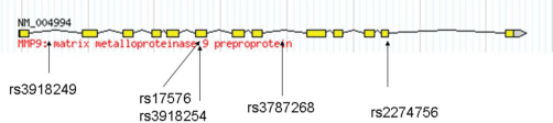 MMP9 gene schematic representation, indicating tag SNP location. Exons are indicated by boxes and joined by introns indicated by solid lines. Figure adapted from the HapMap website.