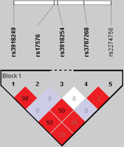 The haplotype block structure of the tag SNPs of MMP9. The number in the box represents the r2 value. Values in light blue boxes do not reach statistical significance.