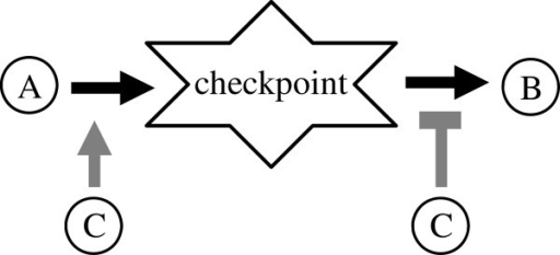 A representation of a biological checkpoint. The positive state of node C is a condition for A to activate the checkpoint node. The activation of B depends on the absence of C.