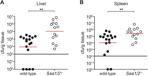 Saa1/2−/− mice have higher bacterial burdens following S. typhimurium infection.10 week old wild-type and Saa1/2−/− mice were inoculated intraperitoneally with 10,000 cfu of S. typhimurium. Livers (A) and spleens (B) were collected after 24 hr and analyzed for bacterial counts by dilution plating. Combined results from two independent experiments are shown. Each point represents one mouse and geometric means are indicated. Dotted line indicates limit of detection. **p < 0.01 using the Mann–Whitney test.DOI:http://dx.doi.org/10.7554/eLife.03206.019