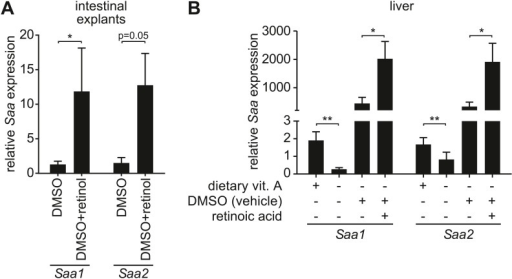 Retinoid supplementation stimulates Saa expression in intestine and liver.(A) Five centimeter explants from the distal small intestine (ileum) of vitamin A-replete mice were cultured for 6 hr in the presence of 0.1% DMSO or 1 µM retinol in 0.1% DMSO. Saa transcript abundance was determined by Q-PCR. N = 6 mice/condition. (B) Vitamin A-depleted mice were treated with retinoic acid administered by intraperitoneal injection daily over the course of three days. Saa transcript abundance was determined by Q-PCR. Note that injection of DMSO vehicle alone resulted in increased Saa expression. N = 4–17 mice/condition. Mean ± SEM is plotted. *p < 0.05, **p < 0.01. p values were determined by the Mann–Whitney test in (A) and two-tailed Student's t test in (B).DOI:http://dx.doi.org/10.7554/eLife.03206.006
