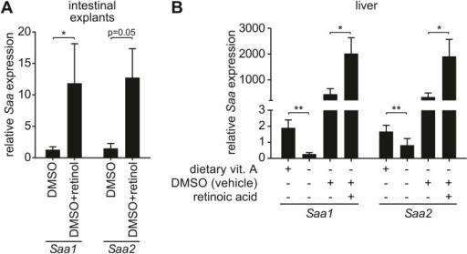 Retinoid supplementation stimulates Saa expression in i