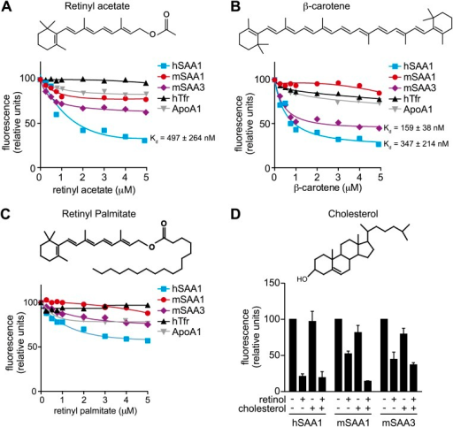 Additional ligand binding studies on human and mouse SAAs.(A–C) Retinyl acetate (A), β-carotene (B), and retinyl palmitate (C) were titrated into hSAA1, mSAA1, mSAA3, hTfr (negative control) and ApoA1 (negative control), and fluorescence quenching was monitored at 334 nm with excitation at 296 nm. Plots are representative of three independent experiments. The Kds are averages of the values derived from the three experiments. (D) Competitive inhibition of retinol binding by cholesterol was quantified. Saturating concentrations of retinol were added to hSAA1, mSAA1, and mSAA3, and fluorescence quenching was monitored as in (A–C). 10 μM cholesterol was added into the assay and inhibition of fluorescence quenching by retinol was monitored. Values are the average ± SEM of triplicate experiments.DOI:http://dx.doi.org/10.7554/eLife.03206.009
