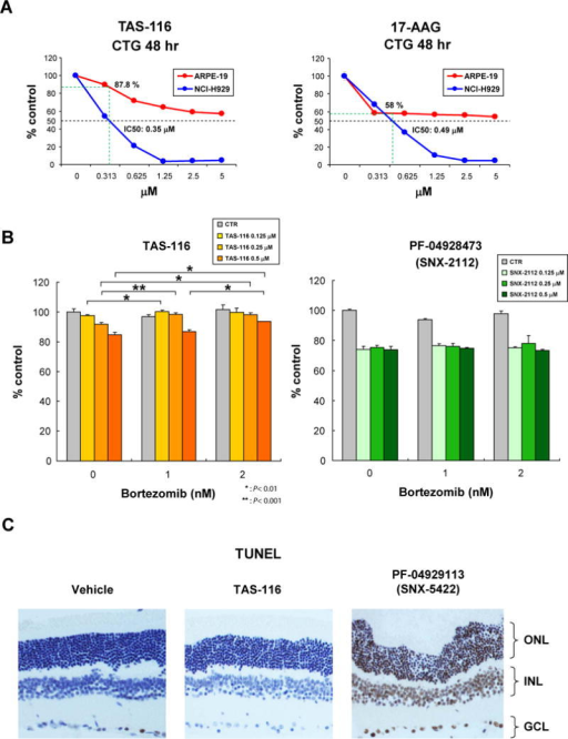 TAS-116 is less toxic to human retinal pigment epithelial cells than other HSP90 inhibitors, and does not trigger ocular toxicity in mice(A) Human retinal pigment epithelial ARPE-19 cell lines and NCI-H929 MM cells were cultured with TAS-116 or 17-AAG (0–5 μM) for 48 hours. Cell viability was assessed by CellTiter-Glo® assay of triplicate cultures, expressed as percentage of untreated control. Data represent mean ± SD.(B) ARPE-19 cells were cultured for 48 hours with BTZ (0–2 nM) in combination with TAS-116 (0 μM: gray, 0.125 μM: gold, 0.25 μM: light orange, 0.5 μM: orange) or PF-04928473 (SNX-2112) (0 μM: gray, 0.125 μM: light green, 0.25 μM: sea green, 0.5 μM: green). Cell proliferation was assessed by CellTiter-Glo® assay of triplicate cultures, expressed as percentage of untreated control. Data represent mean ± SD. (* P < .01; ** P < .001)(C) TAS-116 (15 mg/kg; 5 days a week), PF-04929113 (SNX-5422) (40 mg/kg; 3 times per week), or vehicle were administered orally in SCID mice for two weeks. Retinal morphology and photoreceptor cell death were evaluated by TUNEL staining. ONL indicates outer nuclear layer; INL, inner nuclear layer; GCL, ganglion cell layer.