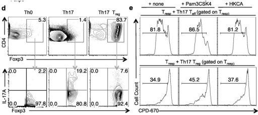"TLR-2 ligands induce proliferation but not plasticity in Tregs stimulated under Th17 conditions. CPD-670 dilution (proliferation) (a), or Foxp3 expression (b), of Treg cells co-cultured with conventional CD4+ T cells under Th17 conditions for four days, with or without Pam3CSK4, HKCA, or by themselves without (d4-no IL-2) or with IL-2 (d4-IL-2). CD45.2 Tregs are gated in the analyses. (c) Tregs were stimulated as in ""a"". Foxp3 and IL-17A expression of cells gated on CPD670+CD45.2 Tregs (upper panel), or CPD670-Foxp3-CD45.1 Teff (lower panel) in co-cultures. (d) Foxp3 and CD4 expression (upper panel), of naïve cells that were stimulated under Th0 (Th0) or Th17 (Th17) conditions, or Tregs that were stimulated under Th17 (Th17 Treg) conditions. Foxp3 and IL-17A expression (lower panel), of the Foxp3+ cells in the upper panel. (e) Proliferation suppression of the CD4 responder cells (as in ""2c"") co-cultured with GFP+ Treg cells isolated from cultures stimulated as in ""a"". Data represent three independent experiments."