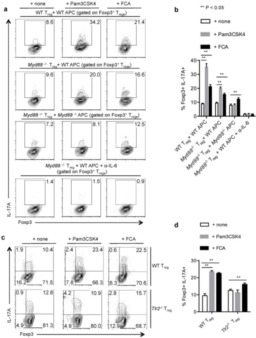 IL-17A production of Tregs in an inflammatory milieu is dependent on TLR-2 expression in Tregs and APC. (a,b) WT or Myd88−/− Tregs were stimulated with WT APC or Myd88−/− APC as indicated, without or with Pam3CSK4 or fixed Candida albicans (FCA) germ tube for four days. Foxp3 and IL-17A expression (a), and statistical representation of IL-17A expression in Foxp3+ Tregs (b). α-IL-6 antibodies were added under Th17 conditions without exogenous IL-6 (a, bottom panel). (c,d) WT or Tlr-2−/− Tregs were stimulated with Tlr-2−/− APC, without or with Pam3CSK4 or FCA for 4 days. Foxp3 and IL-17A expression in CD4 gated cells (c), and statistical representation of IL-17A expression (d), are shown. Data represent at least 3 independent experiments.
