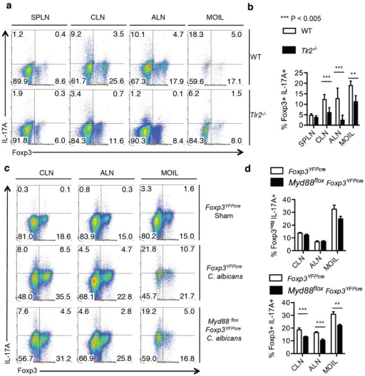 "IL-17A expression in CD4+ Foxp3+ Tregs requires TLR-2 signaling in Tregs during C. albicans infection in vivo. WT C57BL/6 or Tlr-2−/− mice infected with C. albicans, and tissues were isolated as in ""1a"". Flow cytometric plots gated on CD4+ cells showing IL-17A expression (a), and statistical analyses of IL-17A expression in CD4+Foxp3+ cells (b) are shown. Data represent triplicate experiments. (c,d) Foxp3YFPcre or Myd88 fl°x Foxp3YFPcre mice were infected, and cells were isolated as in ""1a"". Flow cytometric plots gated on or CD4+ cells showing IL-17A expression (c), and statistical analyses of IL-17A expression in CD4+Foxp3-cells (d, upper panel) and CD4+Foxp3+ cells (d, lower panel) are shown."