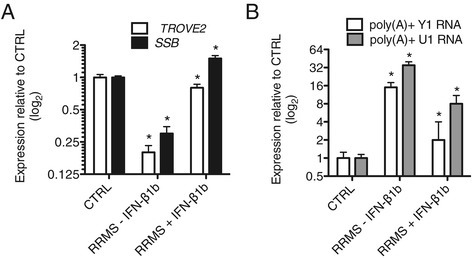 Interferon-β1b (IFN-β1b) therapy corrects aberrant levels of TROVE2, SSB, poly (A) + Y1 RNA, and poly(A) + U1 snRNA in RRMS. Blood samples were collected in PaxGene tubes from CTRL (N = 12), RRMS subjects not on IFN-β1b (RRMS - IFN-β1b, N = 12), and RRMS subjects on stable IFN-β1b therapy (RRMS + IFN-β1b, N = 4). Oligo dT was used for cDNA synthesis. Transcript levels of TROVE2 and SSB (A) or poly(A) + Y1 RNA and poly(A) + U1 RNA (B) were determined by quantitative PCR and normalized to CTRL = 1 after normalization to levels of GAPDH. Error bars are ± S.D. *P <0.05.