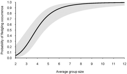 Predicted probability of occurrence of grey-crowned babbler fledglings as a function of average group size.Grey shading represents the 95% confidence interval for predicted values. Predictions were generated from model-averaged parameter estimates of generalized linear mixed models.