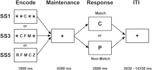 Schematic of the encoding, maintenance, and response events in the Sternberg Item Recognition Task. ITI = inter-trial interval; SS = set size.