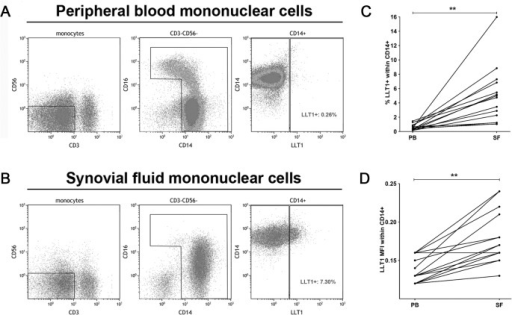 Surface-expressed LLT1 is found on SF monocytes.Monocytes from A) peripheral blood and B) synovial fluid were gated based on forward and side scatter characteristics. After excluding CD3+ and CD56+ lymphocytes, monocytes were gated based on CD14 and CD16 expression. The frequency of LLT1+ cells was assessed within the total monocyte population. C) The frequency of LLT1+ monocytes and D) LLT1 MFI from paired samples of PB and SF (n = 14). Mouse monoclonal anti-LLT1 antibody, clone 402659 (R&D Systems) was used.