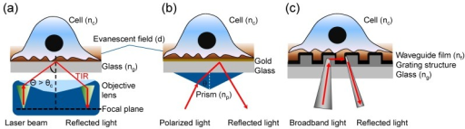 Three types of evanescent wave-excited fluorescence microscopy. (a) Through-the-objective TIRFM, wherein a high numerical aperture (NA) objective lens is used to simultaneously generate the evanescent field at the cell-glass interface and view the cell. A laser light is directed and focused on the back focal plane, which then creates a refracted parallel beam approaching the interface in the small gap between objective and glass coverslip. TIR is achieved when the angle is greater than the critical angle (θ > θc); (b) Prism-based surface plasmon-excited TIRFM, wherein an incident light is directed onto a gold film via a prism, creating an electromagnetic field penetrating into the cell under resonance condition. The reflected beam is detected via a photodetector or imager for SPR measurement, while the excited fluorescence is collected using a separate objective; (c) Resonant waveguide grating-based TIRFM, wherein a grating is used to couple light into the waveguide, creating an evanescent field resulting from total internal reflection of the light beam. The excited fluorescence is collected using a CCD camera.