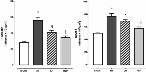 Quantitative evaluation of P-selectin and ICAM-1 expression on rat mesenteric microvessels 24 h after intravenous injection of E. coli. SHAM, sham-operated rats; NT, non-treated rats; LR, lactated Ringer's solution (4 mL/kg)-treated rats; REP (4 mL/Kg LR + 50 mg/kg ethyl pyruvate)-treated rats. The presented values are the mean ± SEM for 3 samples/rat, with 3 rats/group. The analyses were performed using NIS-Elements BR software (Nikon). The results are presented as objectsx103/μm2. *p<0.001 versus SHAM, §p<0.01 versus SHAM and NT, †p<0.001 versus NT, ?p<0.01 versus LR.