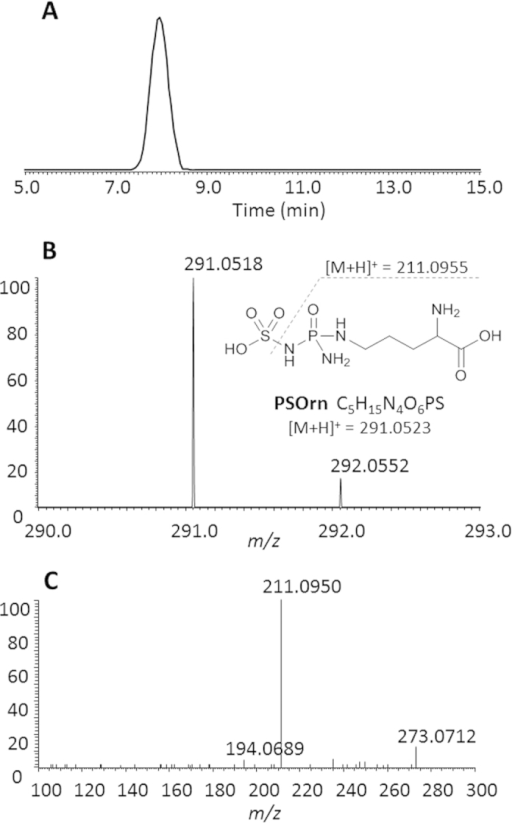 HR MS spectra of PSOrn.(A) Extracted ion chromatogram of PSOrn, with a tolerance of 5 ppm. (B) high resolution mass spectrum of PSOrn (inset is fragmentation pattern of PSOrn); (C) tandem mass (MS2) spectrum of PSOrn.