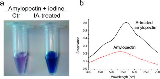 Photos of iodine dyed amylopectin and isoamylase treated amylopectin.(a) and light absorption spectrum of the iodine-stained amylopectin compared with isoamylase treated amylopectin. Reaction conditions were 0.75% amylopectin in 40 mM acetate buffer (pH 5.5) containing 0.5 mM MgCl2 and 7.5 μg/ml isoamylase incubated at 80 °C for 30 min. The stained samples were diluted by a factor of 10 in water.