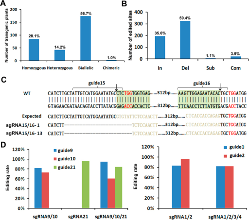 Characterization of genome editing.(A) Editing frequency of transgenic plants. The number on the bar indicates the percentage of each genotype in all edited plants. (B) Editing types. The number on the bar indicates the percentage of each editing type in all edited sites. In (insertion), Del (deletion), Sub (substitution) and Com (complex). (C) Inversion of the DNA fragment. Shown are the amplified upstream and downstream junctions as well as their sequences. Deleted bases are indicated by dashes. Arrow indicates the predicted cleavage site. The red 3-base sequence indicates the PAM motif. Guide 15/16 sequences are indicated. (D) Comparison of editing rate between constructs with different number of sgRNA cassettes.