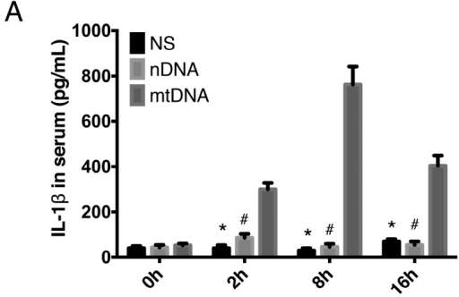 Intra-peritoneal administration of mtDNA leads to systemic inflammation. WT mice were treated with PBS, nuclear DNA (nDNA), or mtDNA via intra-peritoneal injection for 2, 8, and 24 h. Systemic inflammation and circulating levels of IL-1β (A); IL-6 (B); and HMGB1 (C) were measured by ELISA. * p < 0.05 versus mtDNA group; # p < 0.05 versus mtDNA group. Eight mice were used in each set and data are mean ± SEM of three separate experiments.