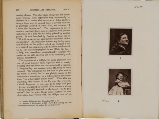 <p>Image of facing pages (p. 250-251) from The expression of the emotions in man and animals / by Charles Darwin. London : John Murray, 1872. Page 250 is text. Page 251 has illustrations of the faces of a woman and of a young girl, both displaying sneering expressions and partially exposing upper teeth.</p>