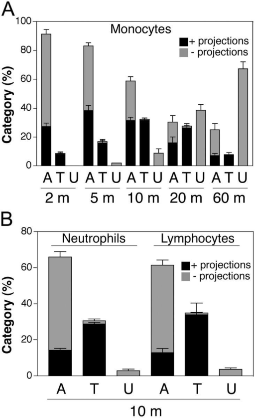ICAM-1 projections are highly associated with transmigrating cells. Monocytes (A) and neutrophils and lymphocytes (B) were incubated with TNF-α–activated and either MCP-1–, PAF-, or SDF-1–pretreated HUVEC monolayers, respectively, for the indicated number of minutes (m). Cells were fixed and stained for ICAM-1, LFA-1, and VE-cadherin. In each of three to eight separate experiments, a minimum of 100 leukocytes from randomly selected fields for each time point were carefully analyzed in all apical to basal planes and scored for the presence of ICAM-1–enriched projections of 1 μm in length or greater and as being either apically adherent (A), in the process of TEM (including both para- and transcellular events and including TEM stages 1–3) (T) or under (U) the HUVEC monolayer. Each bar represents the percentage of total cells scored at each indicated time point that were found in each of the three categories (i.e., A, T, or U). The black portion of each bar is the fraction of cells scored positive for associated ICAM-1 projections. The gray portion of each bar is the fraction of the cells that were negative for the presence of ICAM-1 projections. Values represent mean ± SEM (n = 3–8).