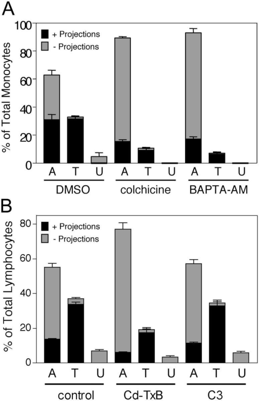 Inhibition of ICAM-1 projections by BAPTA-AM, colchicine, or toxin-B is highly correlated with reduced TEM. (A) TNF-α–activated, MCP-1–pretreated HUVECs were pretreated with vehicle (DMSO, 60 min), 10 μm colchicine (20 min), or 20 μm BAPTA-AM (60 min) washed and incubated with monocytes for 10 min at 37°C. Cells were fixed, stained for ICAM-1 (IC1/11-488), and LFA-1 (CBR-LFA1/7-Cy3) and then analyzed by confocal microscopy. In each of three to five separate experiments at least 100 monocytes in randomly selected fields were carefully analyzed in all apical to basal planes and scored for the presence of significant ICAM-1–enriched projections of 1 μm in length or greater and as being either apically adherent (A), in the process of TEM (including both para- and transcellular events and TEM 1–3) (T) or under (U) the HUVEC monolayer. Each bar represents the percentage of total cells scored for each experimental condition (DMSO, colchicine, or BAPTA-AM) in each of the three categories. The black portion of each bar is the fraction of cells positive for associated ICAM-1 projections. The gray portion of each bar is the fraction of the cells that were negative for the presence of ICAM-1 projections. (B) TNF-α–activated, SDF-1–pretreated HUVECs were pretreated with vehicle (PBS, 60 min, control), 100 ng/ml toxin-B (60 min) or 50 μg/ml C3 transferase (16 h) washed and then incubated with human lymphocytes for 10 min at 37°C. Samples were fixed, stained, and analyzed as in A. Values represent mean ± SEM (n = 3–5).