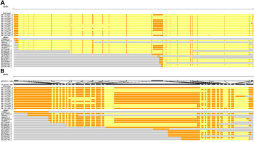 Example of the trackCorrelate function to help visualize splice variants. RefSeq and other mRNAs from the human gene BRCA1 are shown aligned to the genome (a) and after compressing introns (b). After compression, it is much easier to see the different isoforms and, for example, discover that mRNAs BC072418.1 and AF005068.1 are not represented among the RefSeqs.