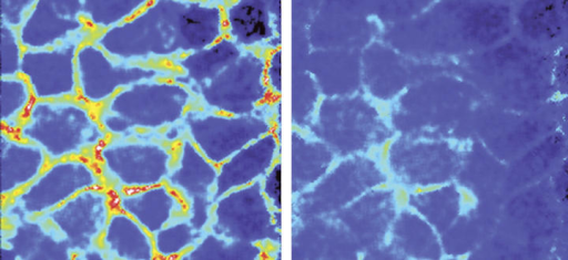 The space (red) between cells gets cramped when pressure is applied (right).Drazen/Macmillan
