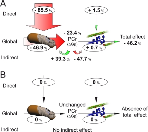 Modular Regulation Analysis of the effects of the decrease in oxygen availability on Control (A) and CH (B) mouse hearts.The size of the arrows is proportional to the effect of the decrease in oxygen availability, and the figures represent the effect expressed as % change from starting condition (high oxygen).