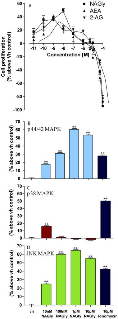 NAGly-induced BV-2 cell proliferation and MAPK enzyme activation. (A) BV-2 microglial proliferation in response to 0.01 nM - 100 μM concentrations of NAGly; AEA; 2-AG; n = 3. (B) p44/42 MAPK activation in BV-2 microglia in response to vh (0.1% DMSO) for 3 hours; 10 nM - 10 μM NAGly for 3 hours; 10 μM Ionomycin for 5 min. ** = P < 0.01 compared to vh; one-way ANOVA; n = 3. (C) p38 MAPK activation in BV-2 microglia in response to vh (0.1% DMSO) for 3 hours; 10 nM - 10 μM NAGly for 3 hours; 10 μM Ionomycin for 5 min. ** = P < 0.01 compared to vh; one-way ANOVA; n = 3. (D) JNK MAPK activation in BV-2 microglia in response to vh (0.1% DMSO) for 3 hours; 10 nM - 10 μM NAGly for 3 hours; 10 μM Ionomycin for 5 min. ** = P < 0.01 compared to vh; one-way ANOVA; n = 3.