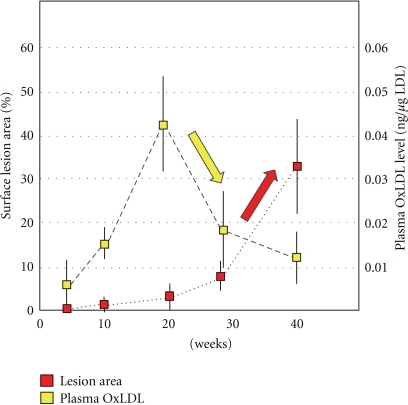 Temporal changes in plasma OxLDL levels and atherogenesis in apoE-KO mice. Male apoE-KO mice were maintained on normal diet up to 40 weeks. The atherosclerotic lesion on the aortic surface increased sharply after 20 weeks. Plasma OxLDL levels increased at 20 weeks just before the lesions began growing. The plasma OxLDL levels seem to decrease concomitantly with an increase in the size of the lesion (cited from [41] with modification).