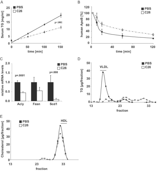 Cachectic mice display impaired hepatic VLDL secretion and hypobetalipoproteinemiaHepatic VLDL release in Balb/C mice injected either PBS or 1.5 × 106 C26 cells (means ± SEM, n ≥ 6, Two Way Repeated Measures ANOVA, Holm-Sidak post hoc).Clearance of human ApoB from serum of Balb/C mice injected with either PBS or 1.5 × 106 C26 cells. 20 µg of human VLDL were injected into each animal and serum samples were taken at the indicated time points. Human ApoB levels were determined by human-specific ELISA (means ± SEM, n = 2–4).Quantitative PCR analysis of hepatic ATP citrate lyase (Acly), fatty acid synthase (Fasn) and stearoyl-CoA desaturase-1 (Scd1) RNA levels in the same mice as in A (Student's t-test).Lipoprotein-associated serum TG levels as measured by fast protein liquid chromatography (FPLC) in the same mice as in A.Lipoprotein-associated serum cholesterol levels as measured by fast protein liquid chromatography (FPLC) in the same mice as in A.