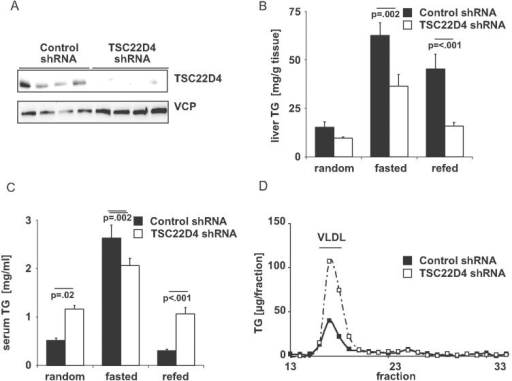 Hepatic TSC22D4 deficiency promotes hypertriglyceridemiaWestern blot of liver extracts from representative control or TSC22D4 shRNA adenovirus–injected C57Bl/6 mice 7 days after injection using TSC22D4 and VCP antibodies.Liver TG levels of random fed, 16 h fasted and 6 h refed control or TSC22D4 shRNA adenovirus–injected C57Bl/6 mice 7 days after injection (means ± SEM, n ≥ 6).Total serum TG levels of the same mice as in B.Lipoprotein-associated serum TG levels as measured by fast protein liquid chromatography (FPLC) in random fed control or TSC22D4 shRNA adenovirus-injected C57Bl/6 mice 7 days after injection (means ± SEM, n ≥ 6). Statistical test B, C: Two Way ANOVA; Holm–Sidak post hoc.