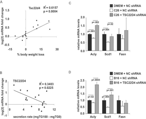 TSC22D4 expression correlates with the degree of body wastingCorrelation of TSC22D4 RNA expression and the degree of weight loss due to tumour implantation in Balb/C mice treated with PBS or 1.5 × 106 colon 26 (C26) cells over 3 weeks (means ± SEM, n ≥ 6, Pearson correlation coefficient, F-test to determine significance).Correlation of TSC22D4 RNA expression and VLDL-TG release in the same mice as in A. (Pearson correlation coefficient, F-test to determine significance)Quantitative PCR analysis of Acly, Scd1 and Fasn RNA levels in primary mouse hepatocytes treated with conditioned media from C26 cells for 24 h and control or TSC22D4 shRNA adenovirus for 48 h (means ± SEM, n = 3, Student's t-test for DMEM NC shRNA vs. C26 NC shRNA; C26 NC shRNA vs. C26 TSC22D4 shRNA).Quantitative PCR analysis of Acly, Scd1 and Fasn RNA levels in primary mouse hepatocytes treated with conditioned media from B16 cells for 24 h and control or TSC22D4 shRNA adenovirus for 48 h (means ± SEM, n = 3, Student's t-test for DMEM NC shRNA vs. B16 NC shRNA; B16 NC shRNA vs. B16 TSC22D4 shRNA).